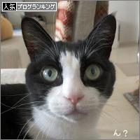 dai20180406_banner.jpg