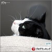 dai20180412_banner.jpg