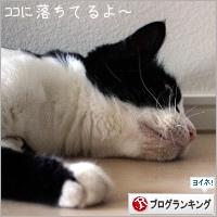 dai20180711_banner.jpg