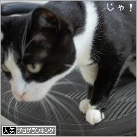 dai20180802_banner.jpg