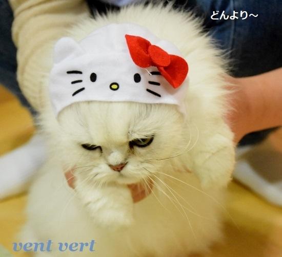 キティ6 (2)