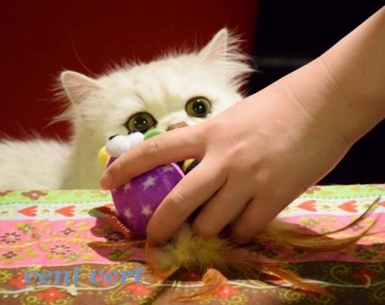 ねずみのおもちゃ1