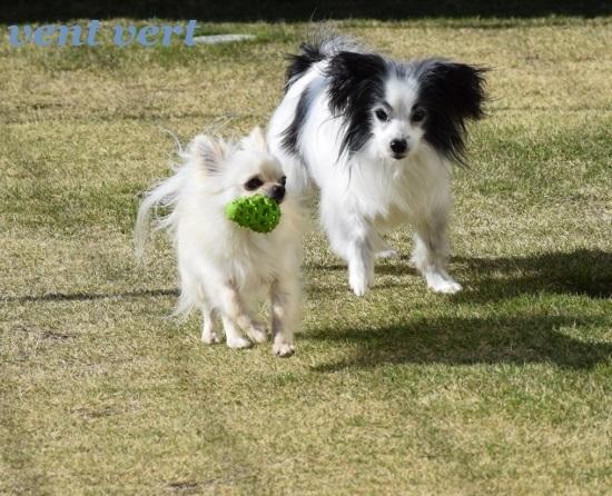 ボール遊び5