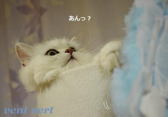 梅雨かな?3