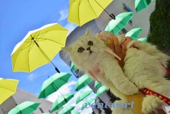 雨ですね7