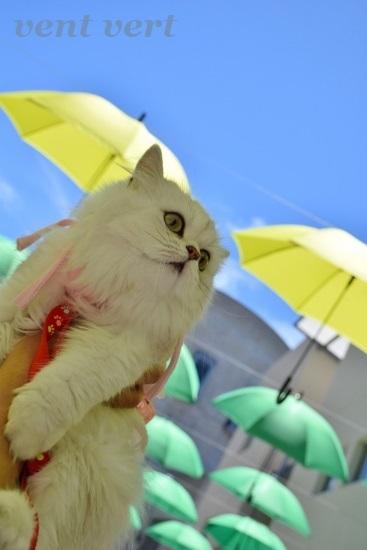 雨ですね8