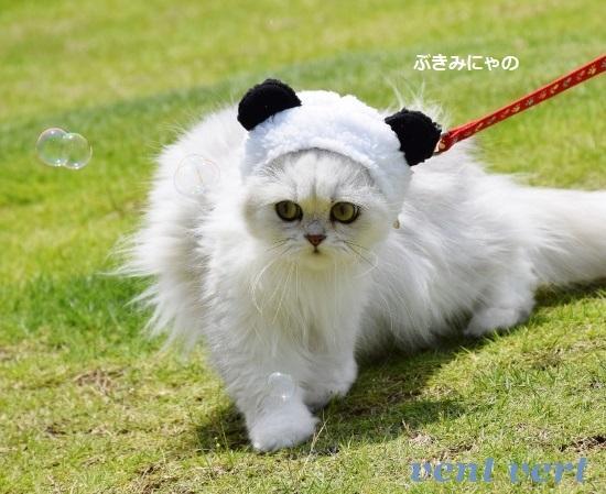 パンダだよ2