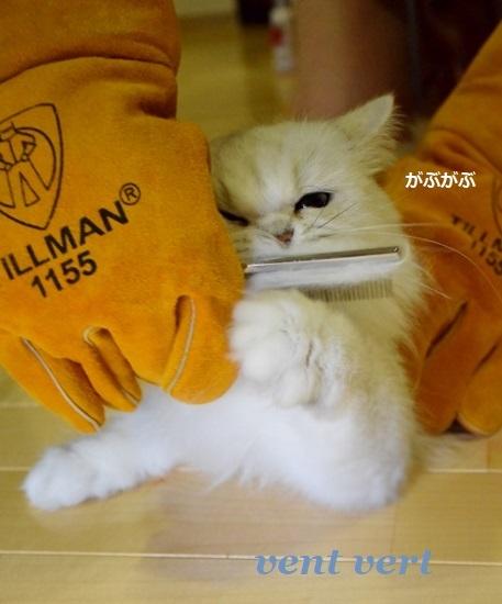 新手袋10