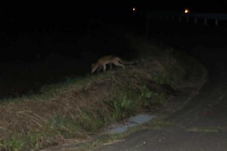 20180905-fox1.jpg