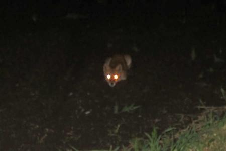 20180905-fox2.jpg