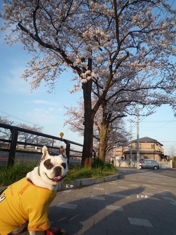 にこら201011to201108 3013 - コピー