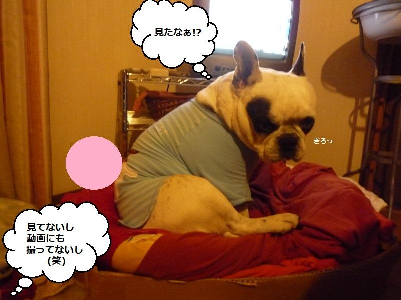 にこら201011to201108 3044