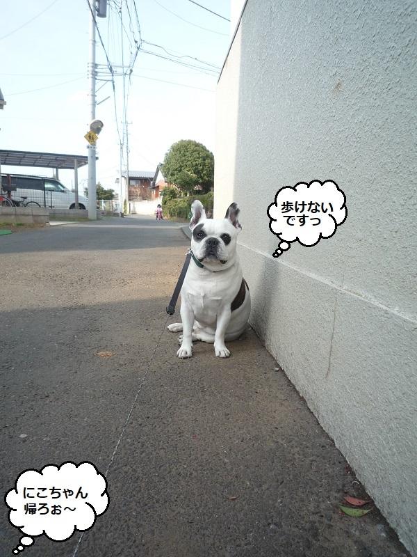 にこら201011to201108 3077