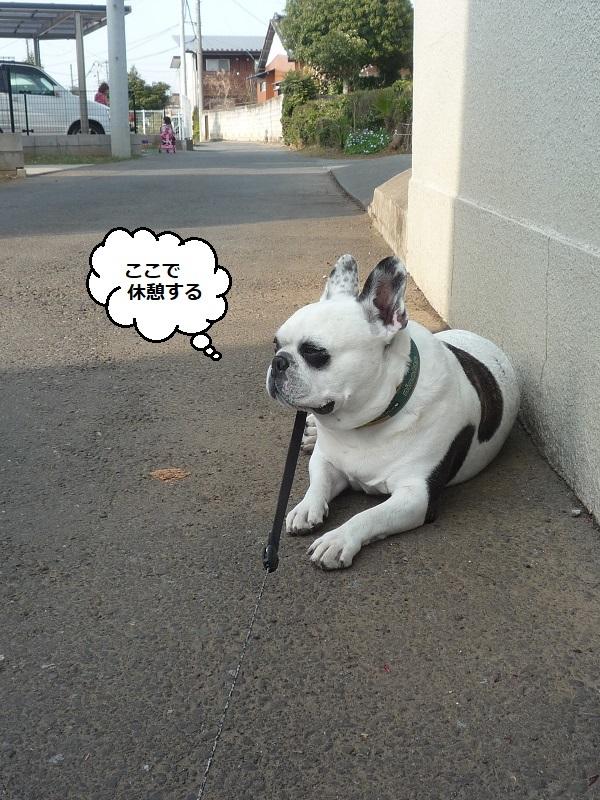 にこら201011to201108 3079