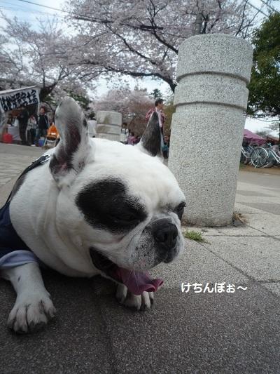 にこら201011to201108 3065
