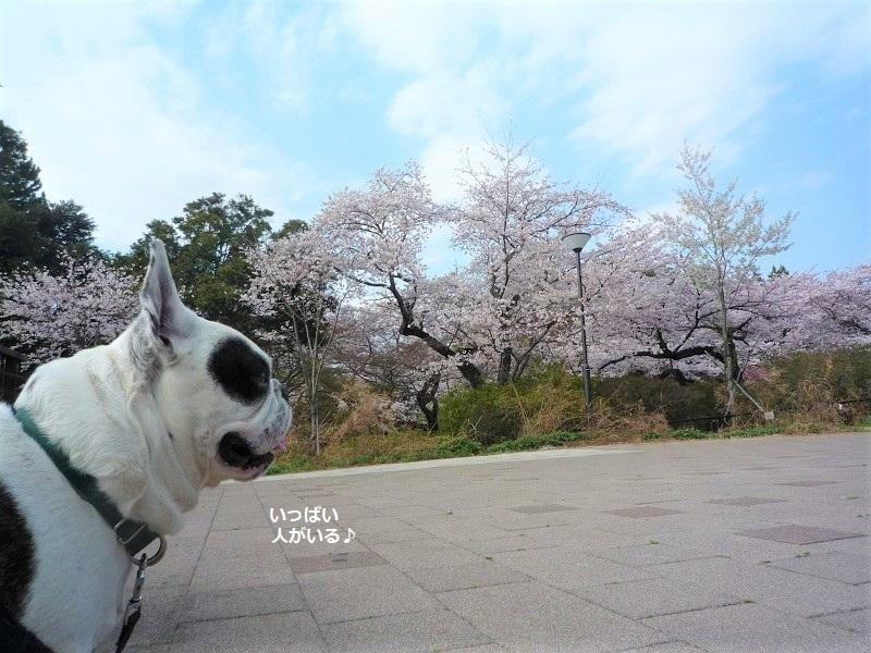 にこら201011to201108 3070 (2)