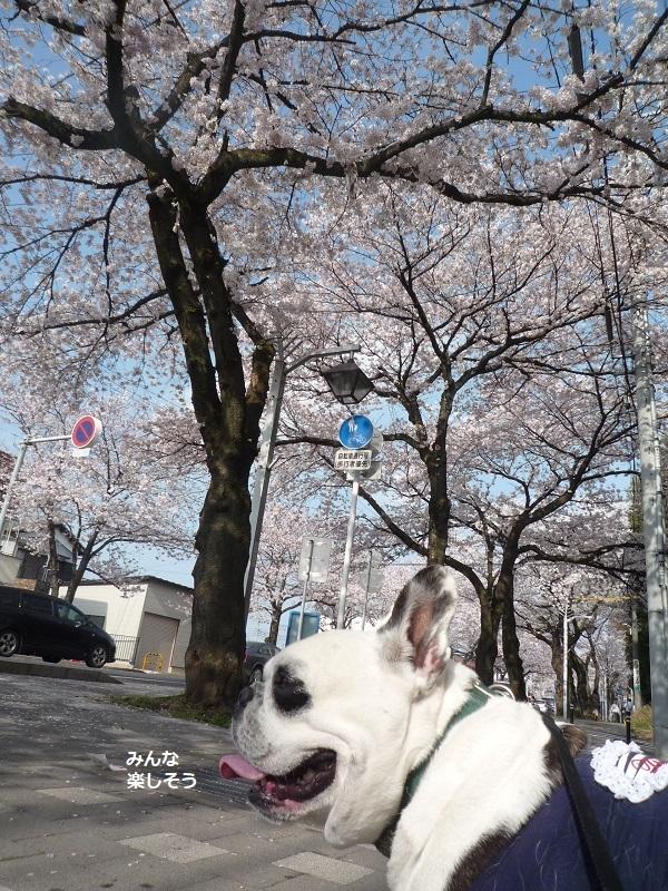 にこら201011to201108 3074