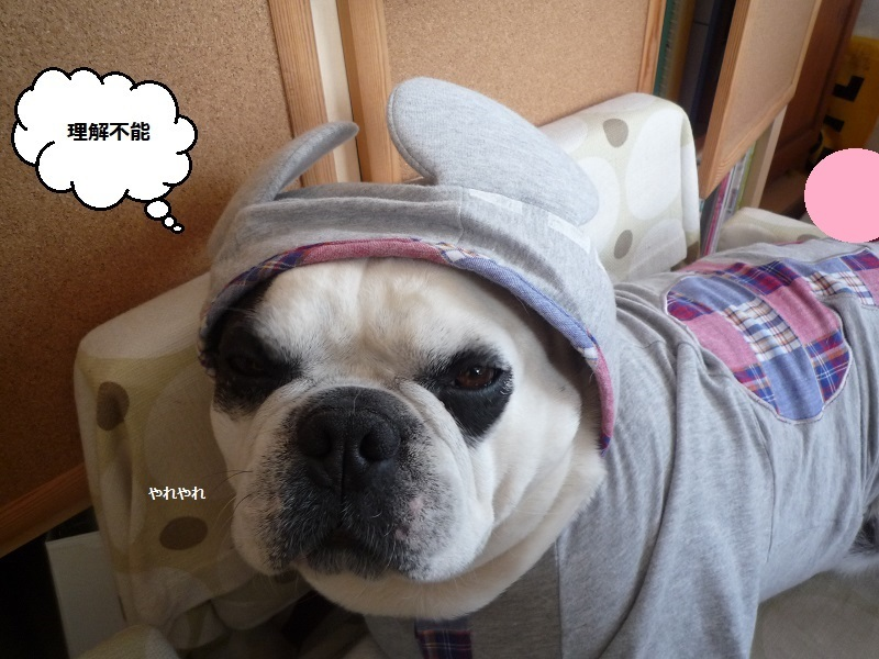 にこら201011to201108 3092