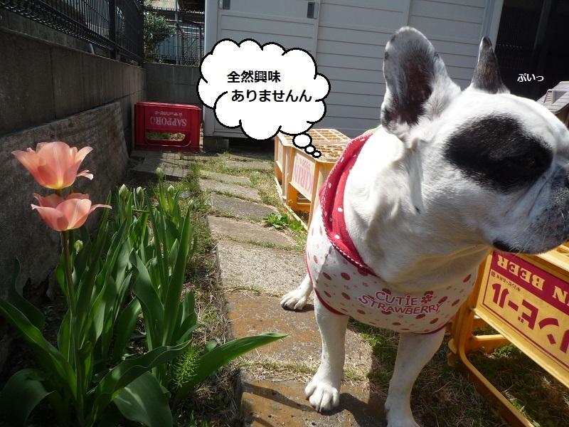 にこら201011to201108 3112