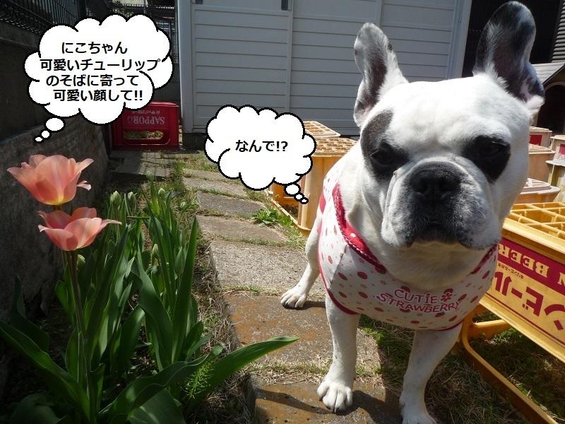 にこら201011to201108 3113