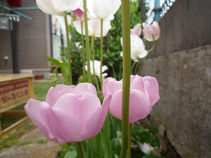 にこら201011to201108 3426