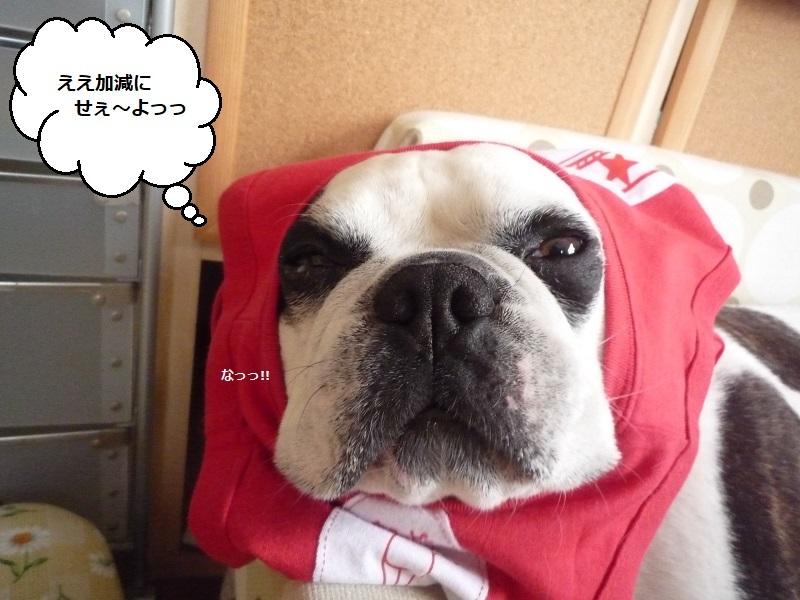 にこら201011to201108 3170