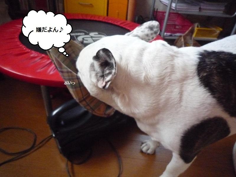 にこら201011to201108 3661