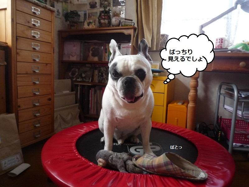 にこら201011to201108 3662