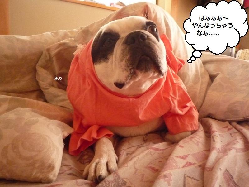 にこら201011to201108 3679