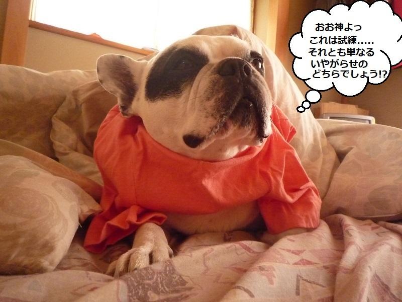 にこら201011to201108 3681