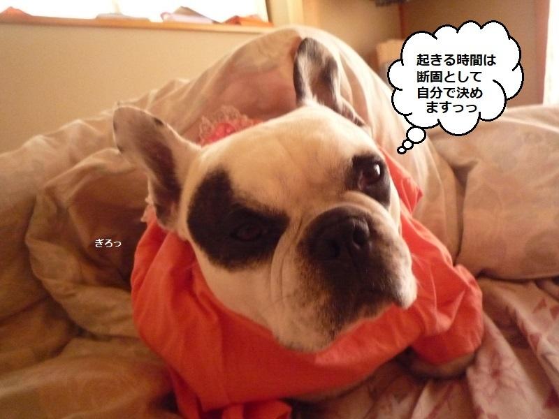 にこら201011to201108 3683