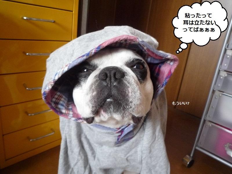 にこら201011to201108 3769