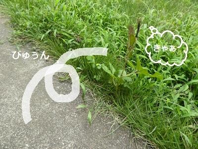 P2080003.jpg