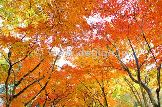 タイトル:Autumn Days(オータムデイズ)より抜粋