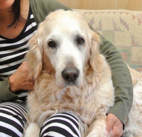 放置された犬を保護して飼育!3カ月後に遺失物届出、返還要求!裁判に発展「年老いた犬と平穏に暮らしたい」 の画像