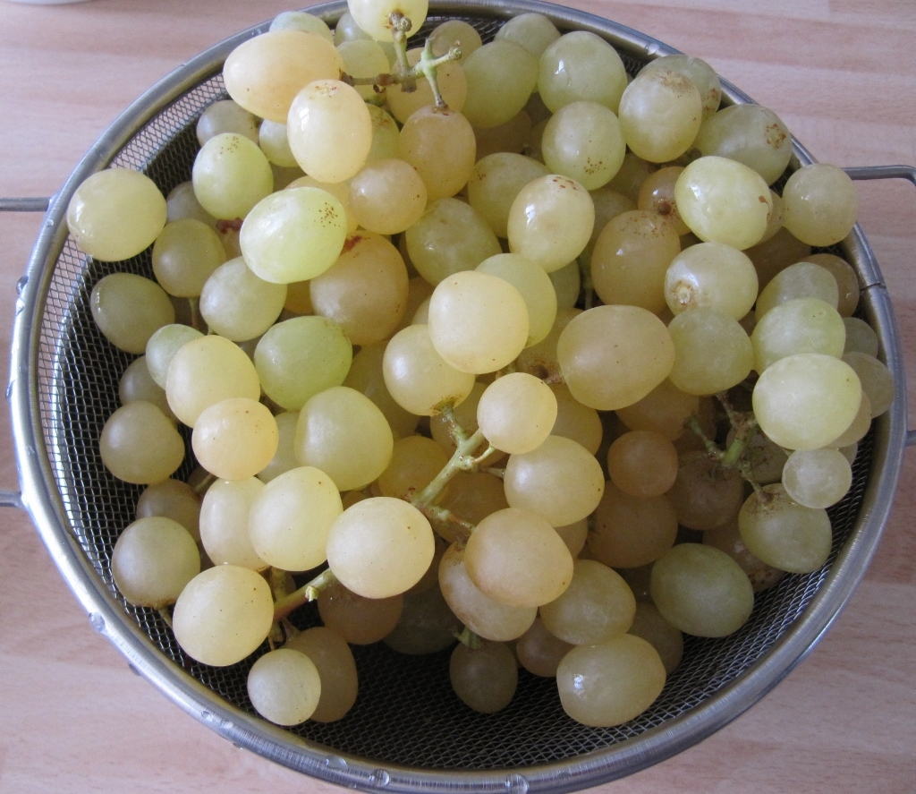 White seedless Grapes (1024x887)