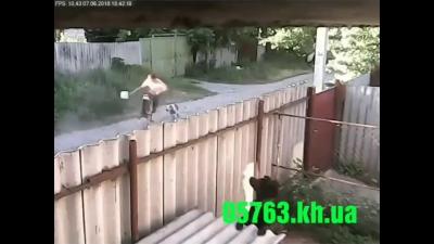 【苦笑】またピットブルだよ!!!