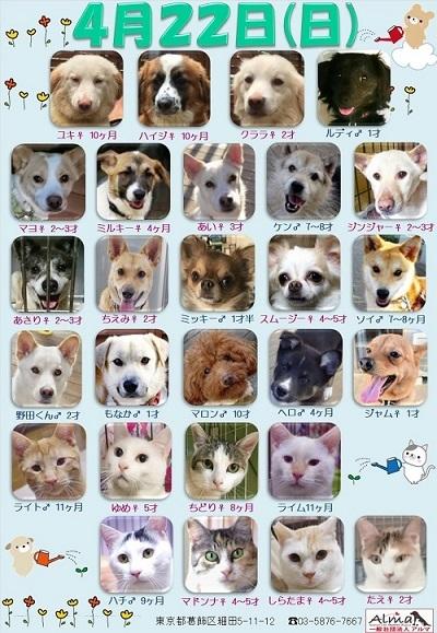 ALMA ティアハイム 2018年4月22日 参加犬猫一覧