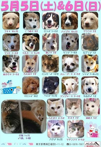 ALMA ティアハイム 2018年5月56日 参加犬猫一覧
