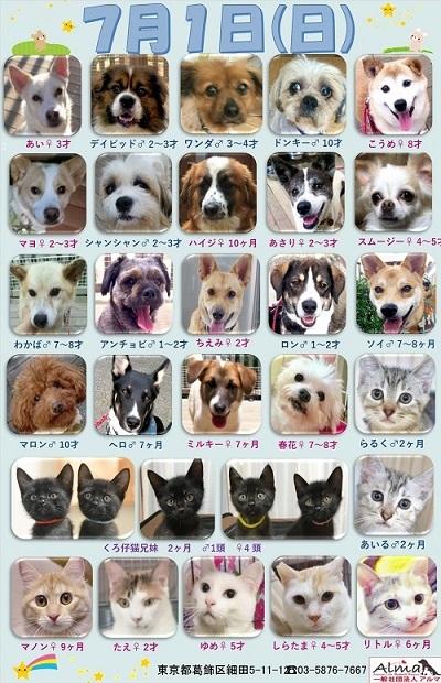 ALMA ティアハイム2018年7月1日 参加犬猫一覧
