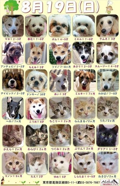 ALMA ティアハイム2018年8月19日 参加犬猫一覧