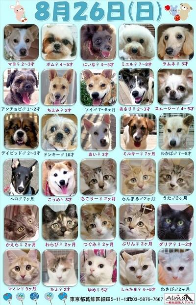ALMA ティアハイム2018年8月26日 参加犬猫一覧