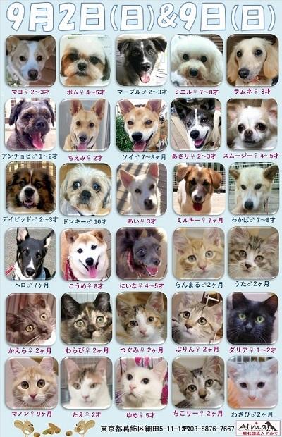 ALMA ティアハイム2018年9月29日 参加犬猫一覧