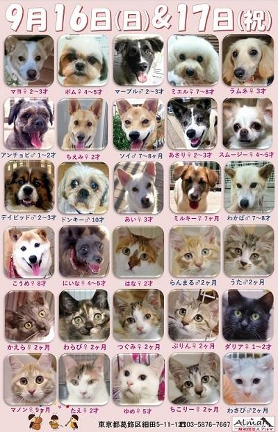 ALMA ティアハイム2018年9月1617日 参加犬猫一覧