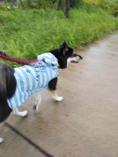 ゆず雨の散歩