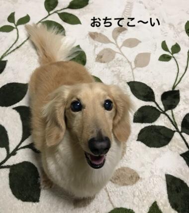 fc2blog_20180611225435e46.jpg