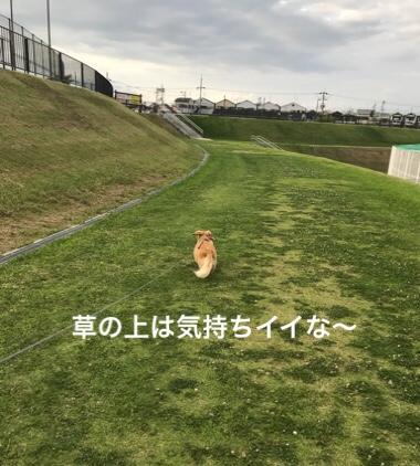 fc2blog_20180620224632f36.jpg