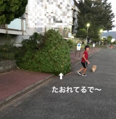 fc2blog_20180905230702219.jpg