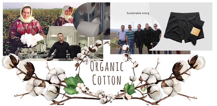 organiccotton1.png