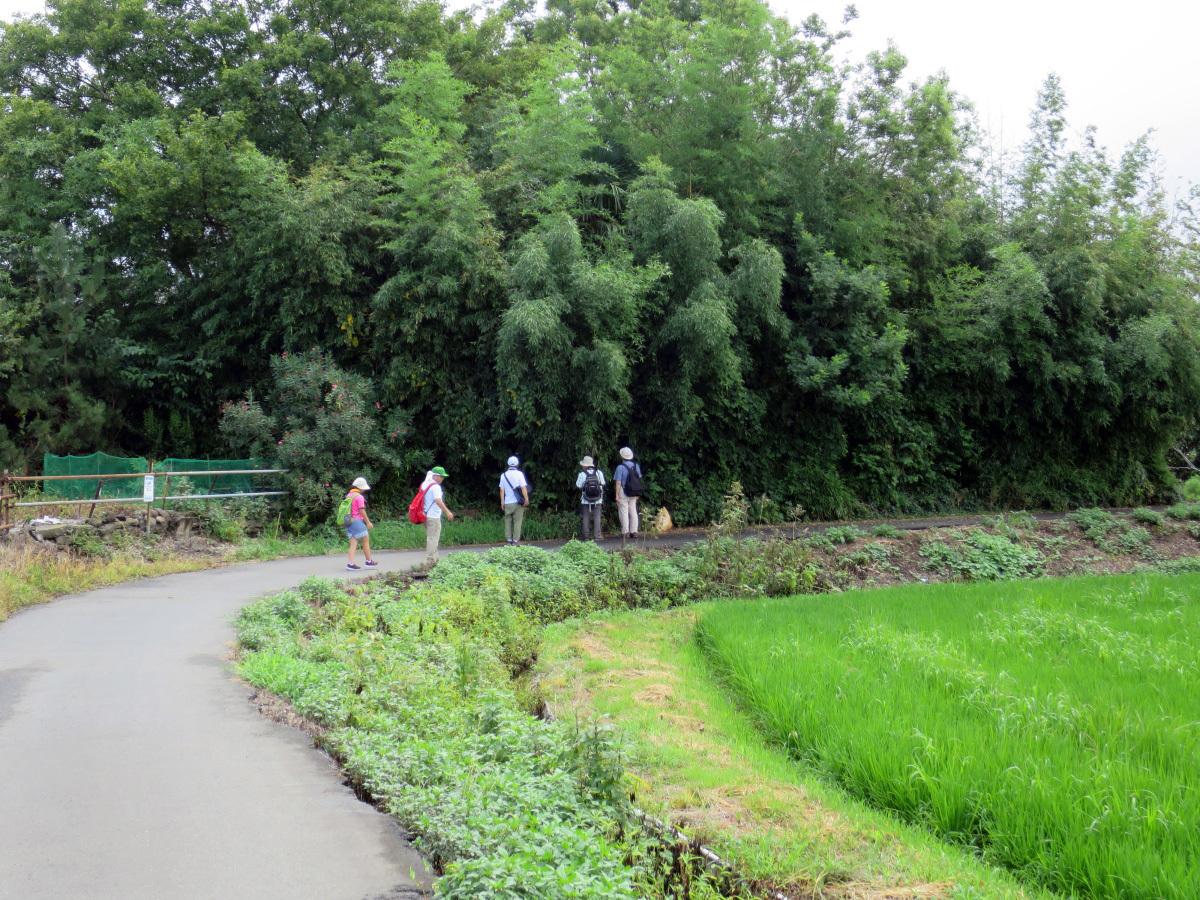 柳瀬川探鳥会